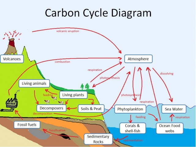 IB Biology: Carbon Cycle Skills.