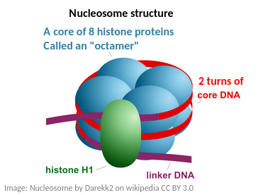 IB Biology: DNA structure - Extras for HL