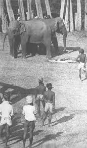 IB English A: Language & Literature: Individual Oral Commentary (SL) Shooting an Elephant (2)