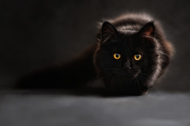 IB English A: Language & Literature: WT1 HL S6 (The Black Cat)