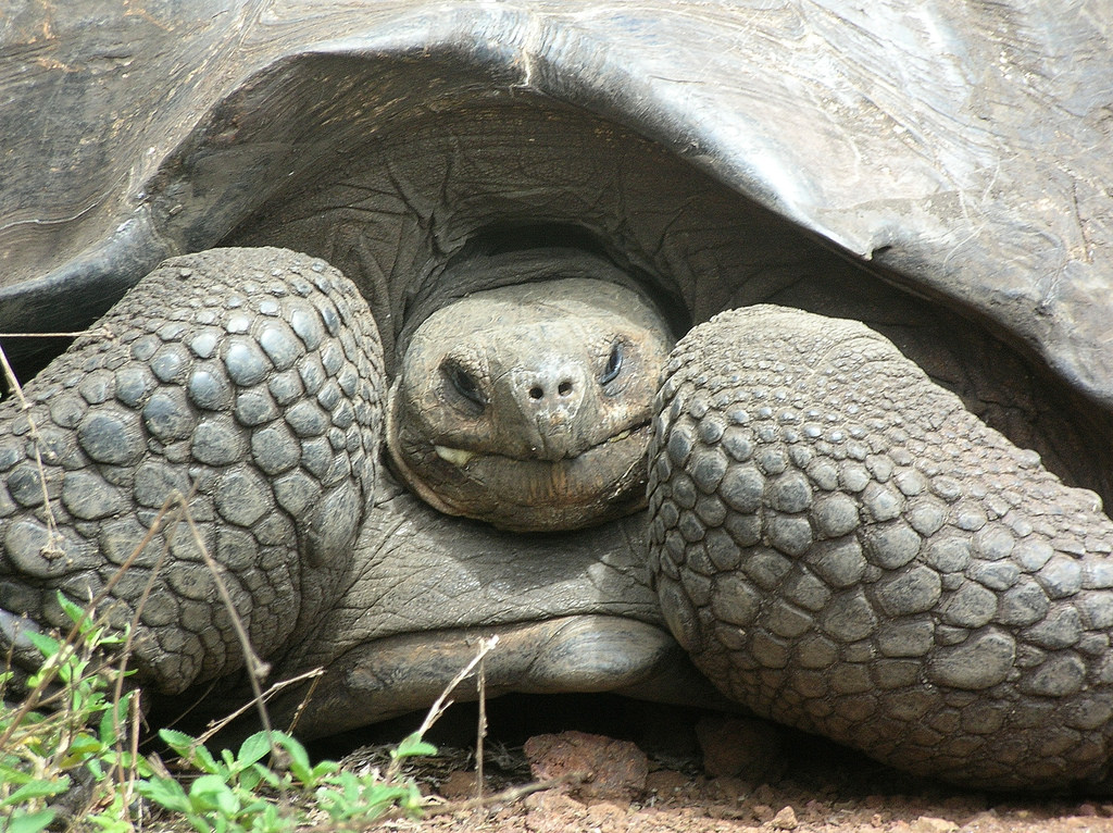 IB English A Literature: Elegy for the Giant Tortoises