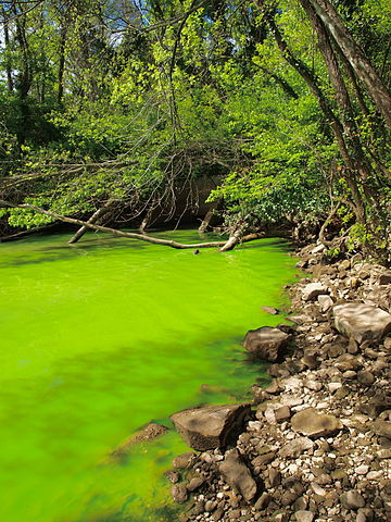 IB Environmental Systems & Societies: 4.4 Water Pollution - Eutrophication