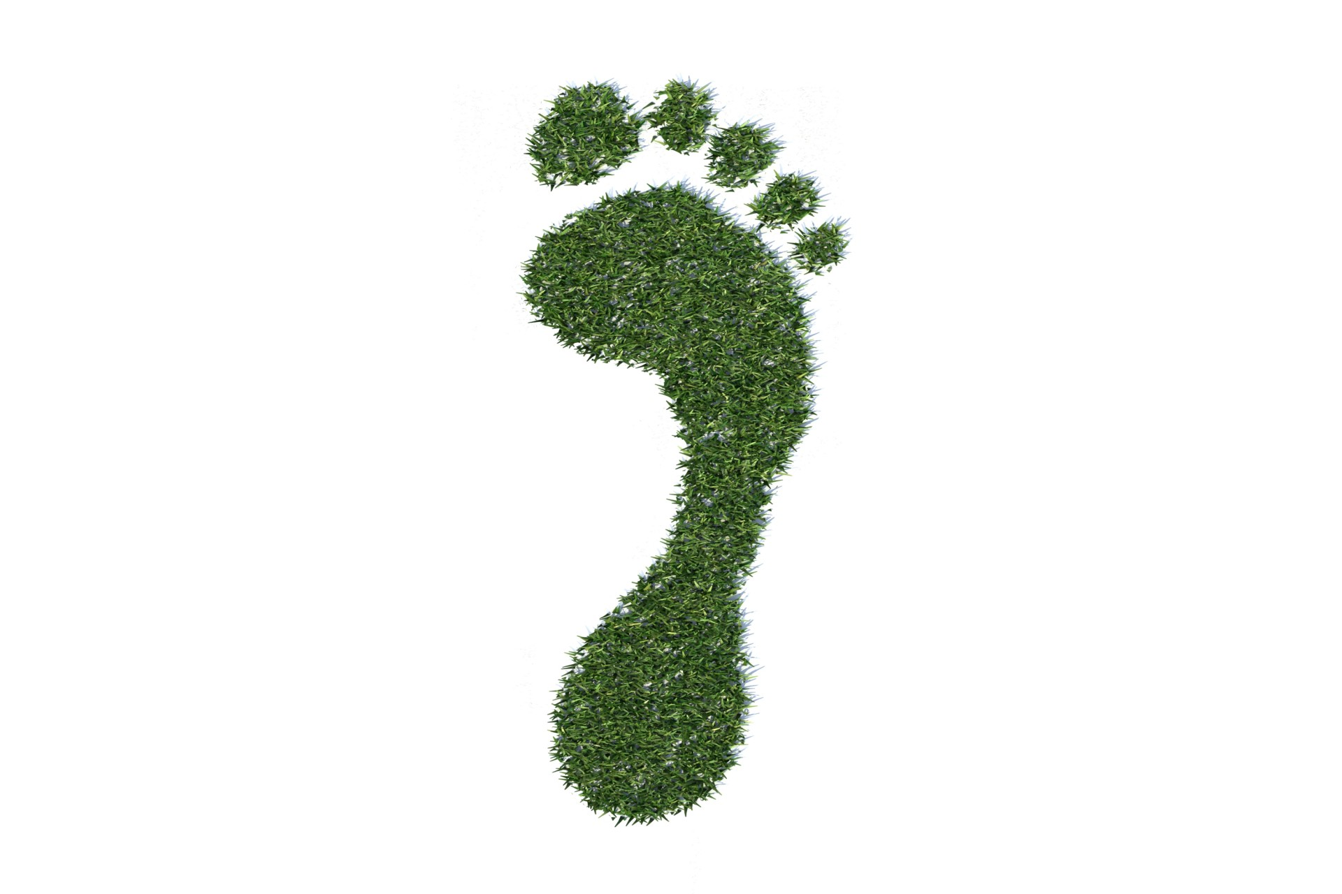 IB Environmental Systems & Societies: 1.4 Ecological Footprints - Personal Investigation