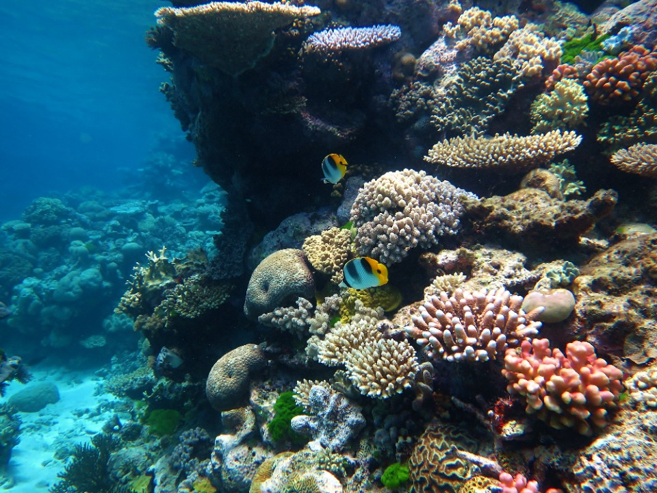 IB Environmental Systems & Societies: The Great Barrier Reef: Can it be saved?