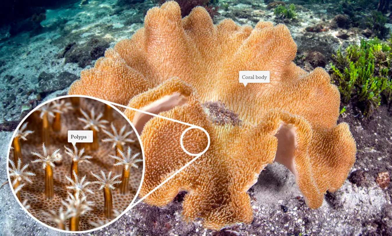IB Geography: Coral Reefs, Stakeholders and Management