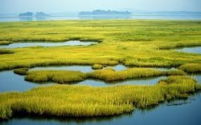 IB Geography: Freshwater Wetland Management