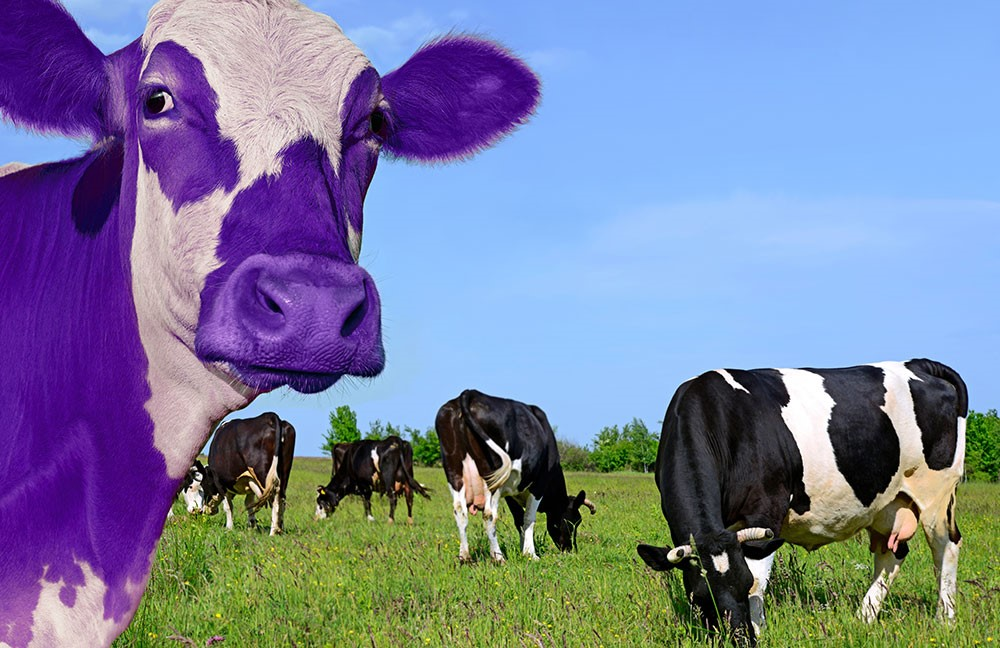 IB School Leadership: Purple cow