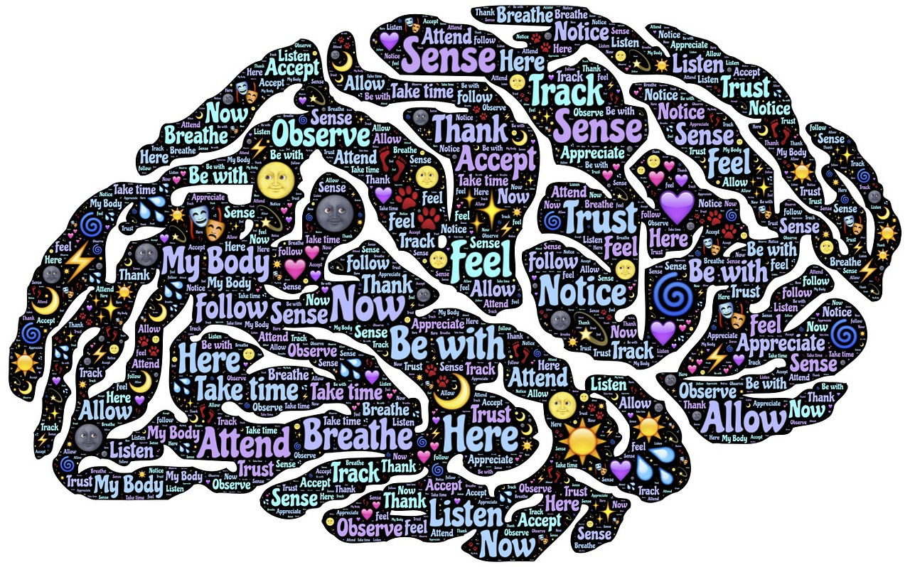 IB Psychology: Geography of the brain